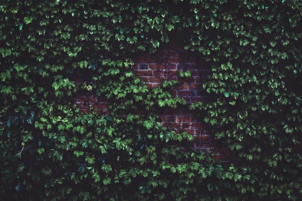 ogrodzenia z klinkieru
